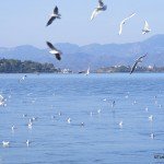 Back To Fethiye – Home Sweet Home