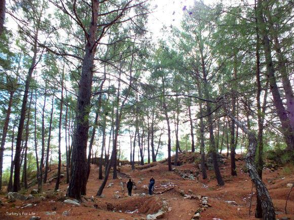 Cadianda Forest Path