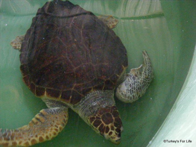 Turtle At DEKAMER