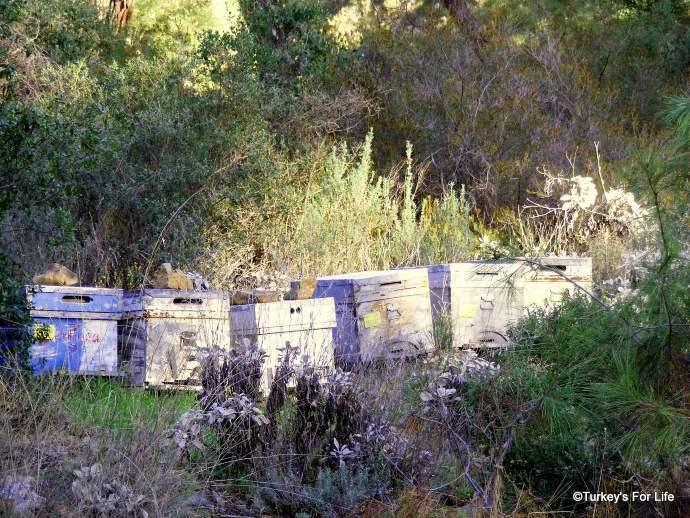 Fethiye Bee Boxes
