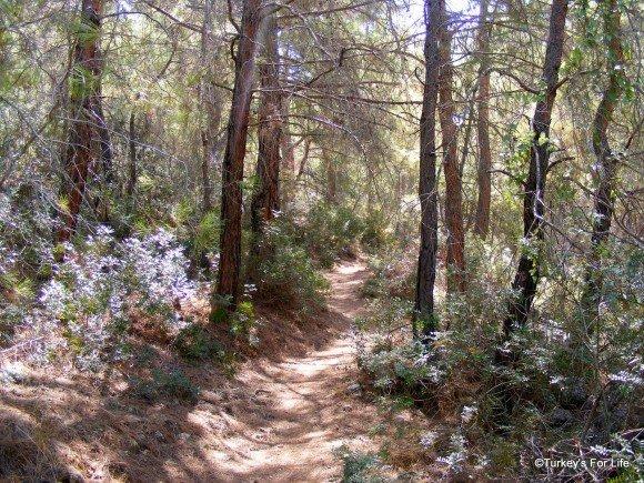 Forest Path From Kayaköy To Ölüdeniz