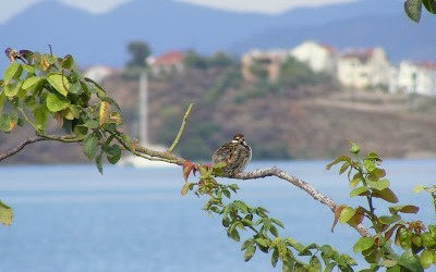 Sparrows In Fethiye