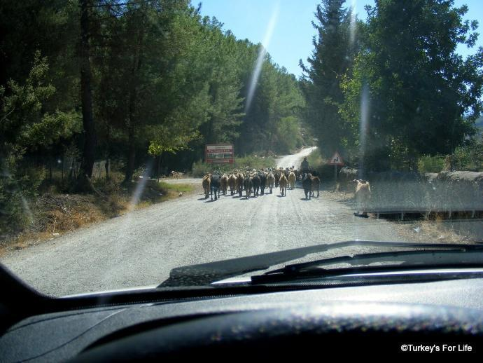 Ören Village Roads
