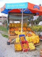 Citrus Fruits In Köycegiz