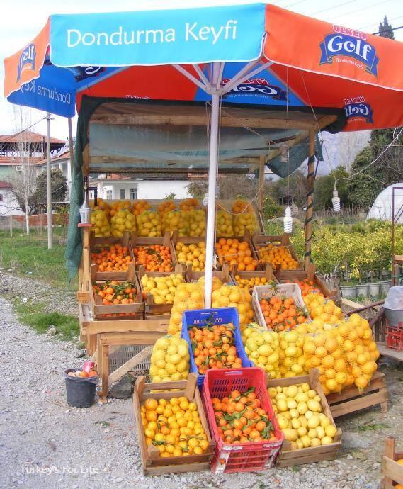 Citrus Fruit Season