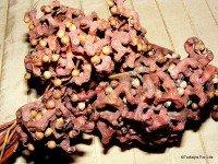 Hurma Turkish Fruit