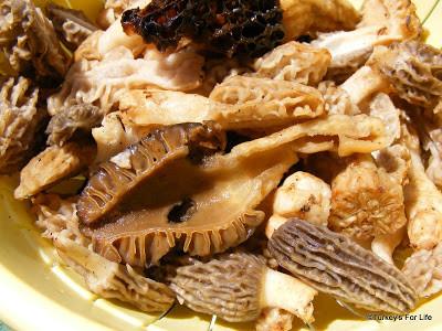 Morel Mushrooms - Kuzu Göbeği Mantarı
