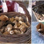 Seasonal Food in Turkey: Morel Mushrooms (Kuzu Göbeği)