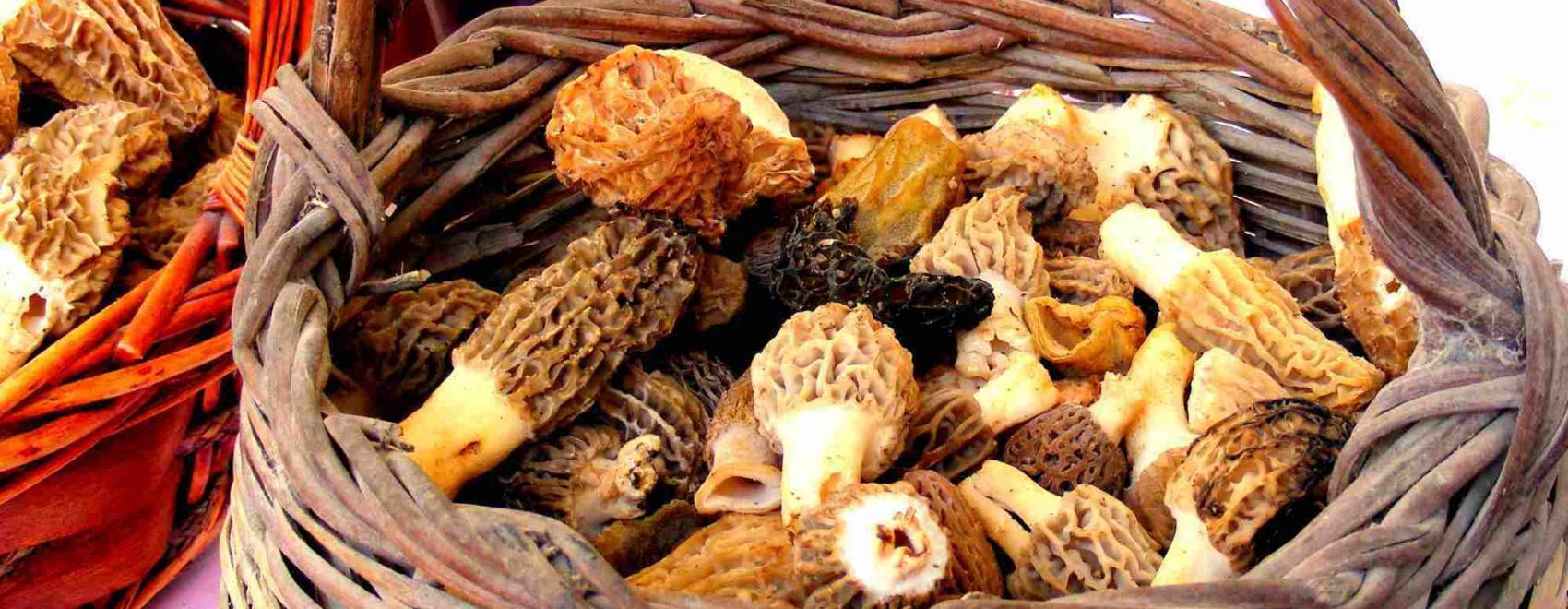 Crispy Fried Morel Mushrooms