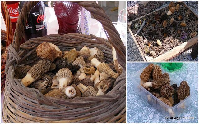 Morel Mushrooms, Turkey