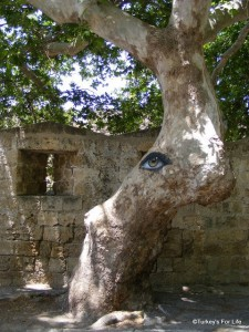 Eye On A Tree, Rhodes Old Town