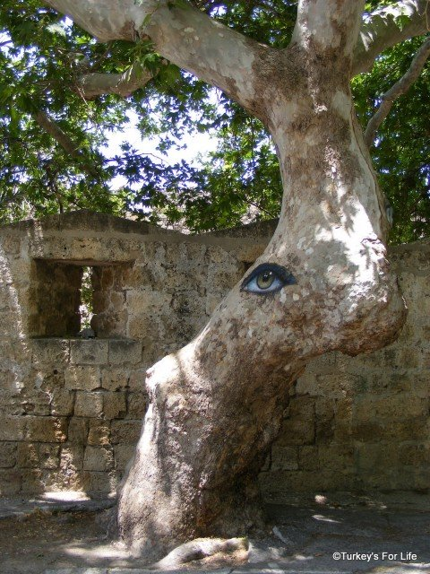 Tree Painting in Rhodes
