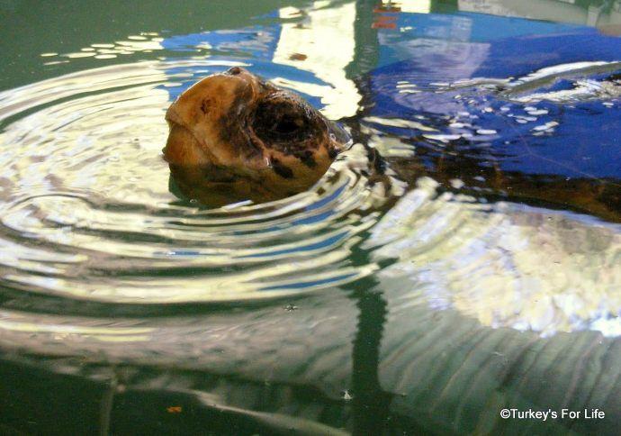 Turtle Rehabilitation At DEKAMER
