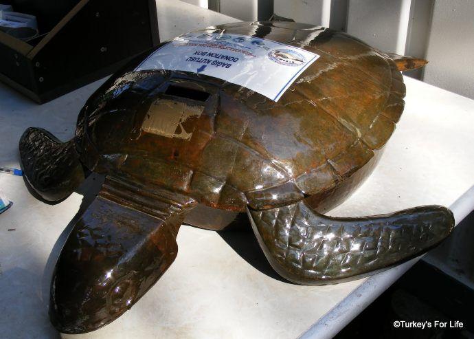 Turtle Research At Iztuzu Beach, Dalyan