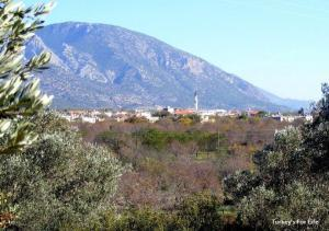 Yazıköy Olive Groves, Datça Peninsula