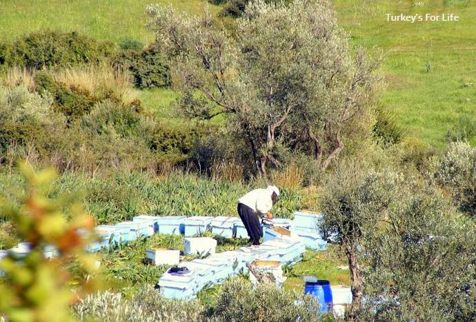 Bee Keeping, Xanthos