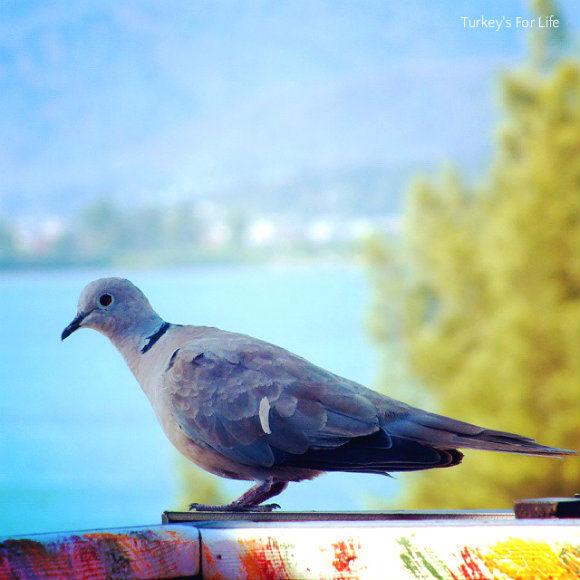 Cafe Park Teras Pigeon