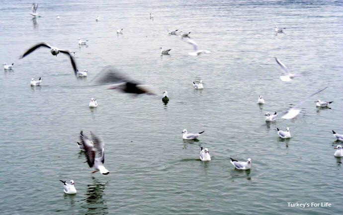 Seagulls At Hello Büfe, Fethiye