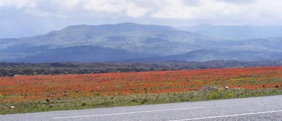 East Turkey - Iğdır Spring Flowers
