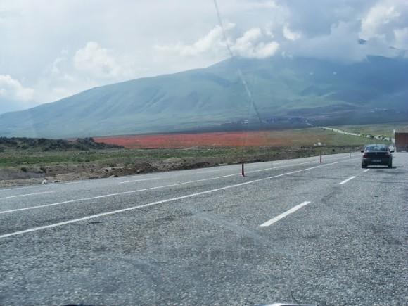 Poppies Near Iğdır, Eastern Turkey