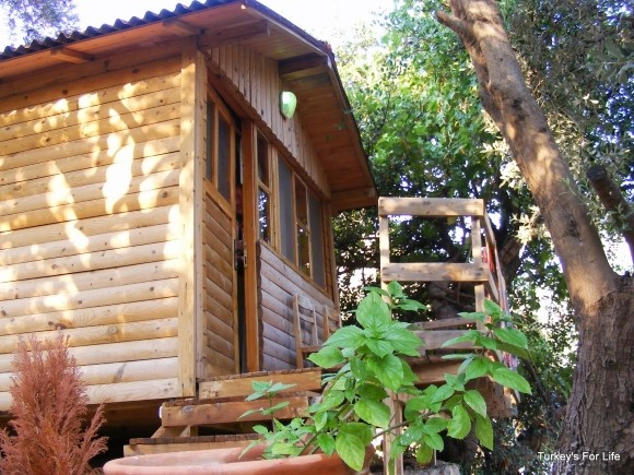 Wooden Bungalow Accommodation At Olive Garden, Kabak