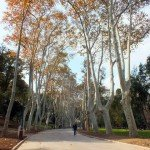 Finding Calm In Autumnal Istanbul – Gülhane Park, Sultanahmet
