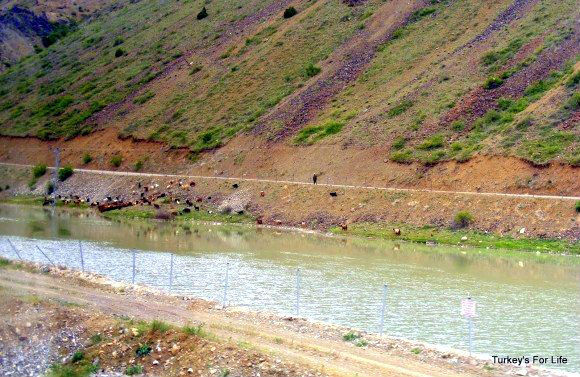 Euphrates From The Doğu Ekspresi Train