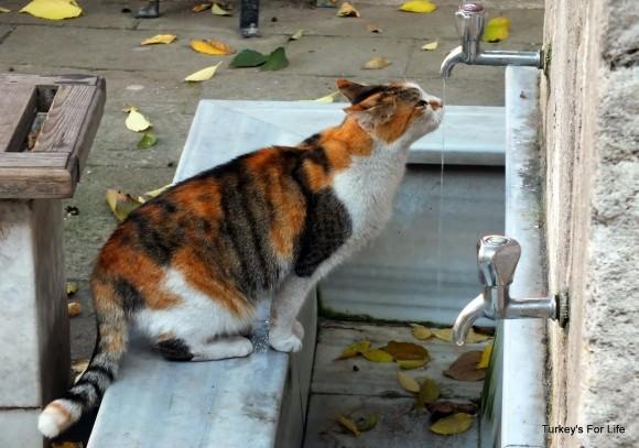 Küçük Ayasofya Cat, Istanbul
