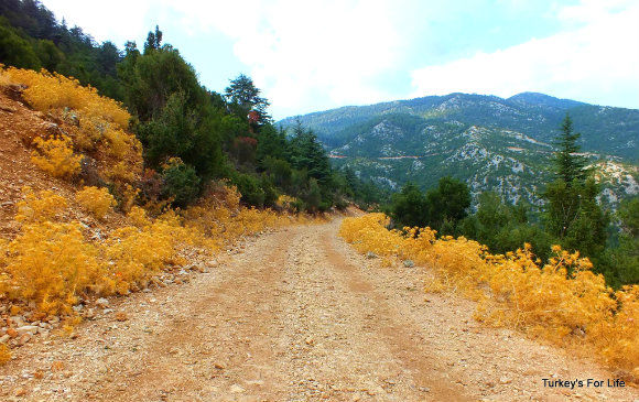 Road To Top Of Babadağ