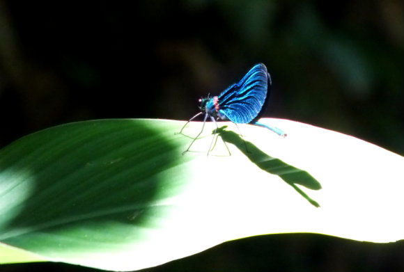 Dragonfly at Yuvarlakçay