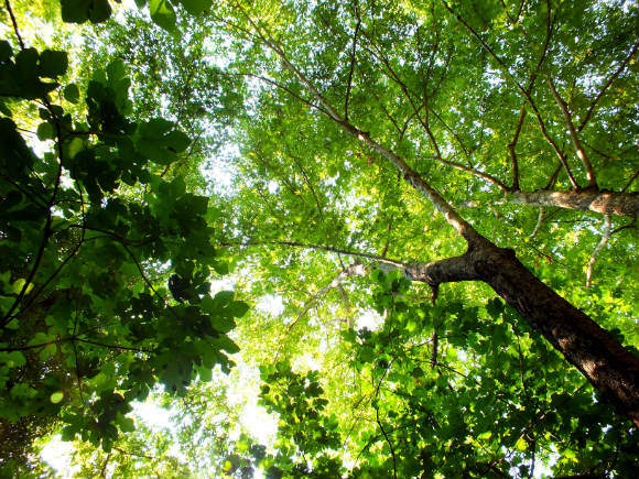 Woodland Around Beyobası Near Köyceğiz