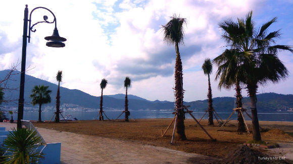 New Palm Trees On Fethiye Harbour