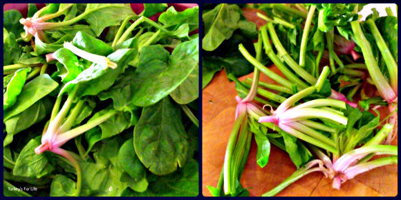 Washed & Trimmed Spinach Stems