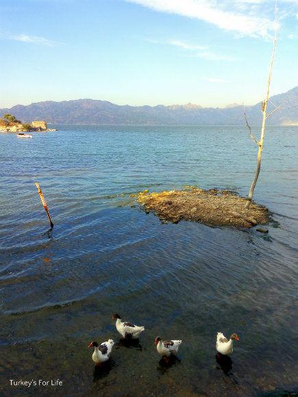 Lake Bafa Geese