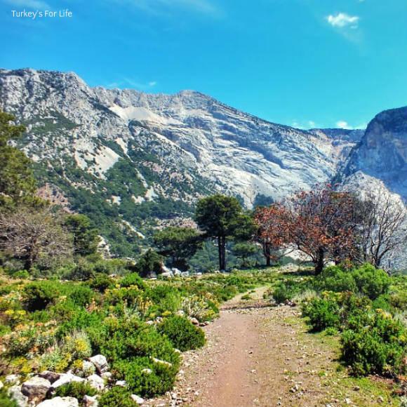 Mountain Path Ovacık To Faralya