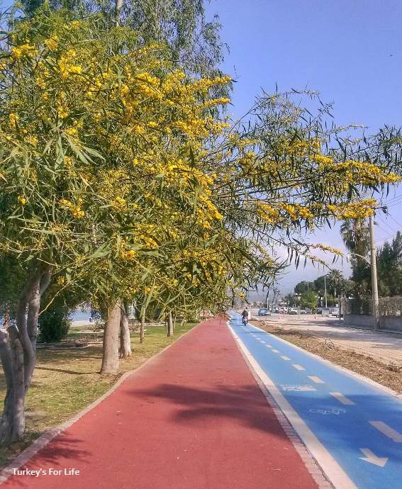 March News Mimosa Season