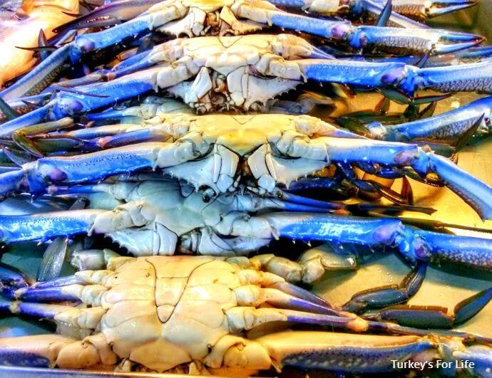 Turkish Blue Crab